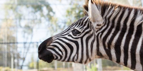 Tourism Darling Downs, Darling Downs Zoo, Experience